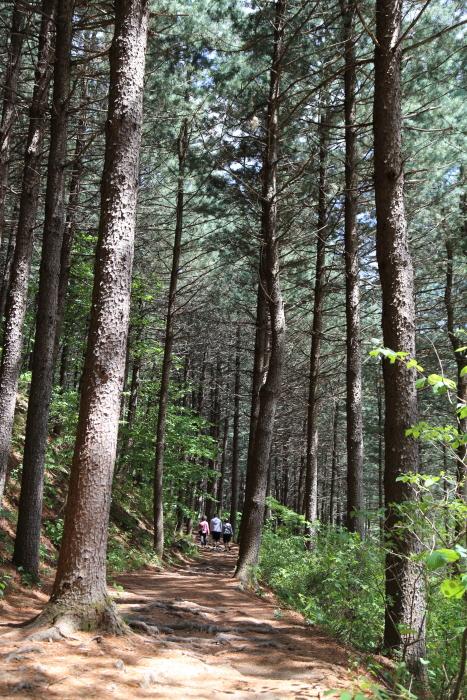 산음자연휴양림의 자랑, 치유의 숲