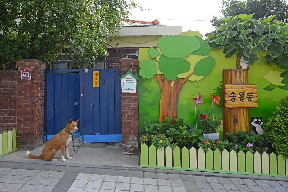 벽화가 그려져 있는 집, 누렁이가 집 밖에 앉아있다
