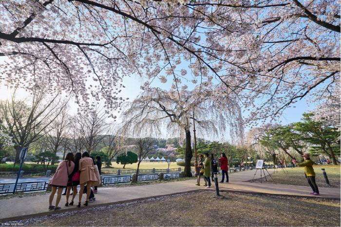 Festival mit Trauerkirschblüten auf dem Seouler Nationalfriedhof (수양벚꽃과 함께하는 열린 현충원 행사)