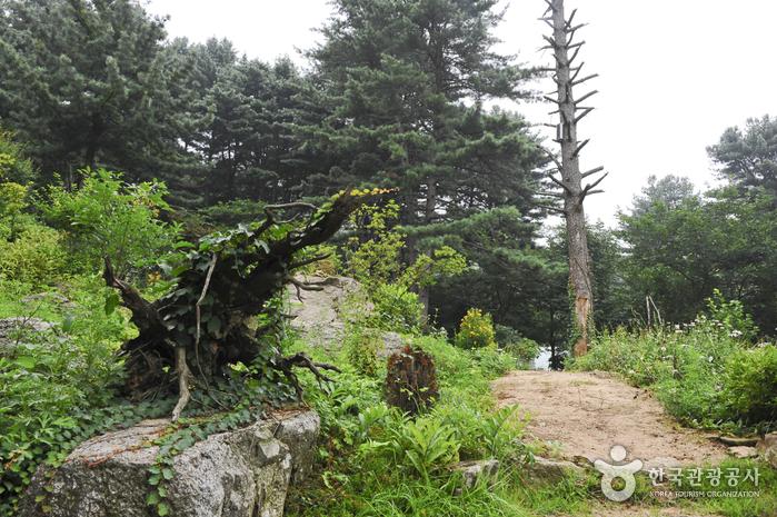 장흥자생수목원
