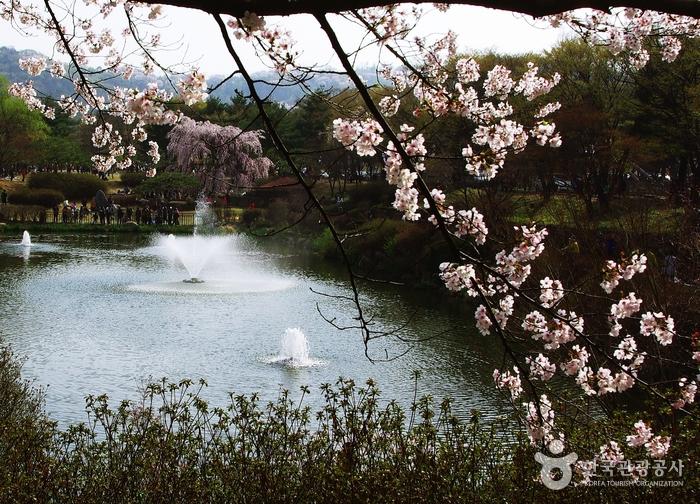 '충혼'의 수양벚꽃 마중하는 호젓한 꽃길의 이미지