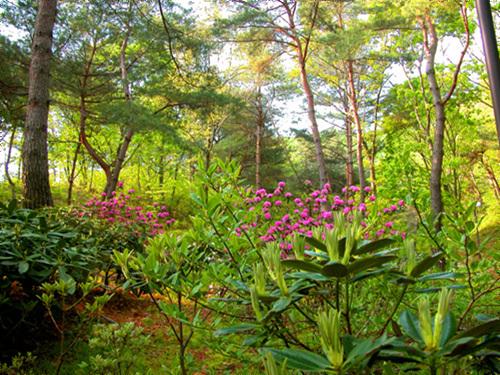 Pyunggang Botanical Garden (평강식물원)