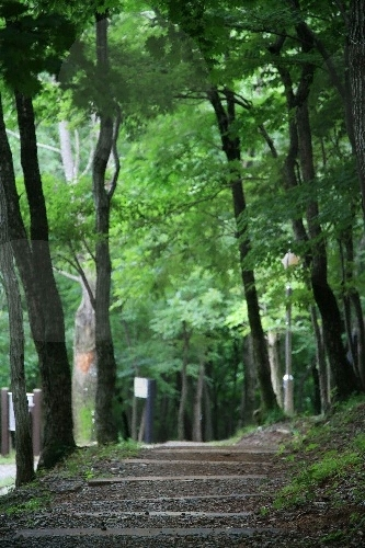 Geoje Recreational Forest (거제자연휴양림)