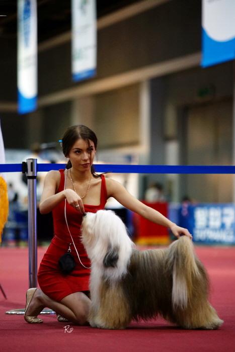 안성 FCI 국제 도그쇼 2017  사진1