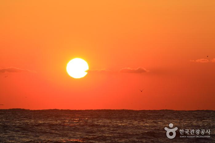 Homigot Sunrise Festival (호미곶 한민족 해맞이축전)