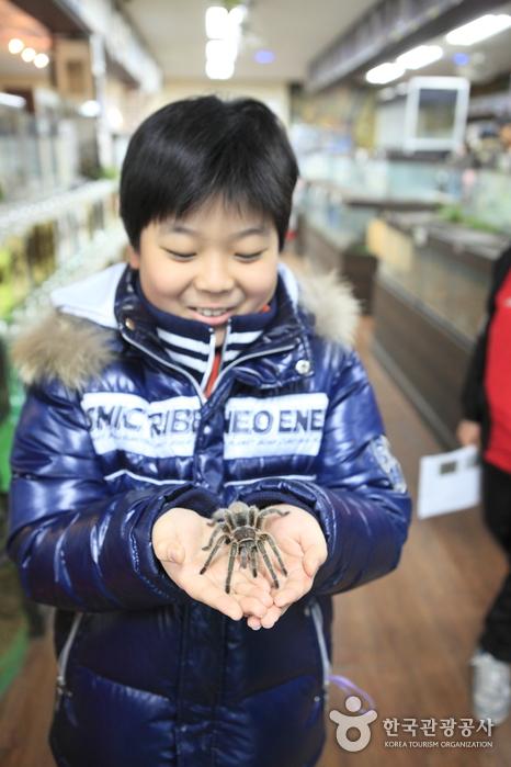 Arachnopia (JooPil Spider Museum), (아라크노피아 생태수목원·주필거미박물관)