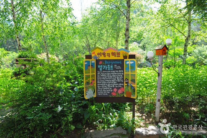Herbnara Farm (허브나라농원)