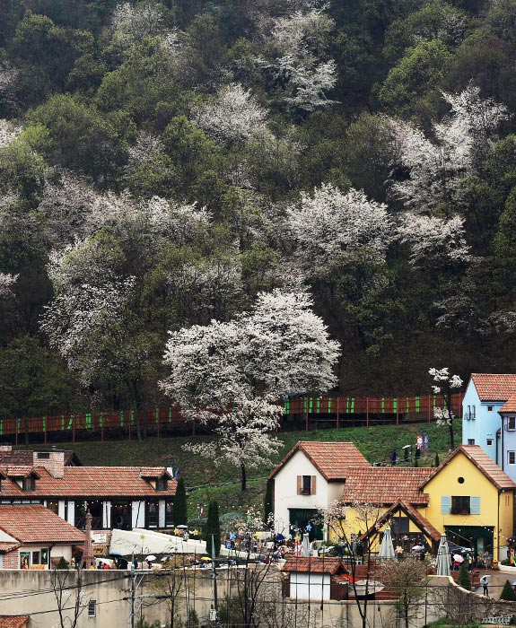 꽃 따라 나비 따라 떠나는 봄날여행