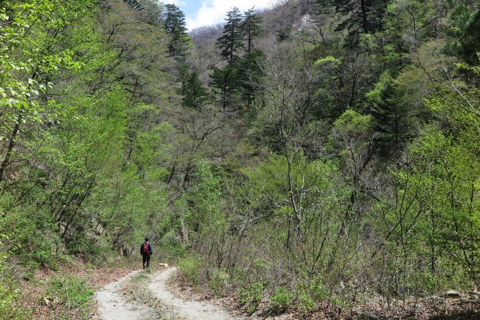불바라기약수터 가는 길에 백두대간이 키운 숲이 울창하다