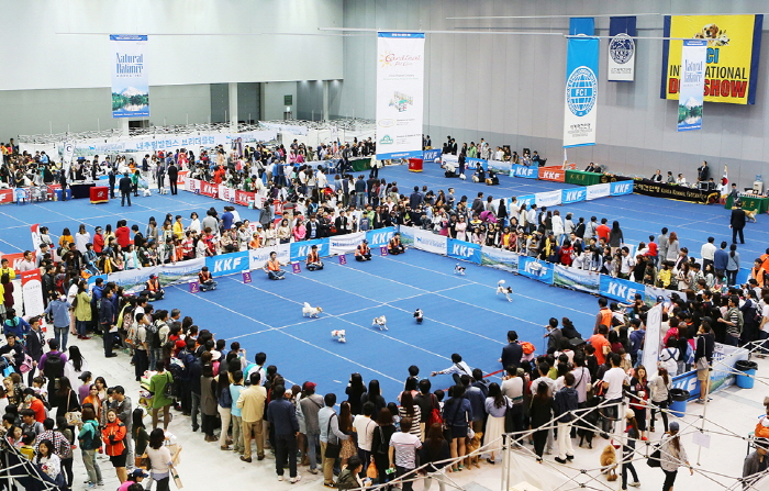 대구 FCI 국제 도그쇼 2018