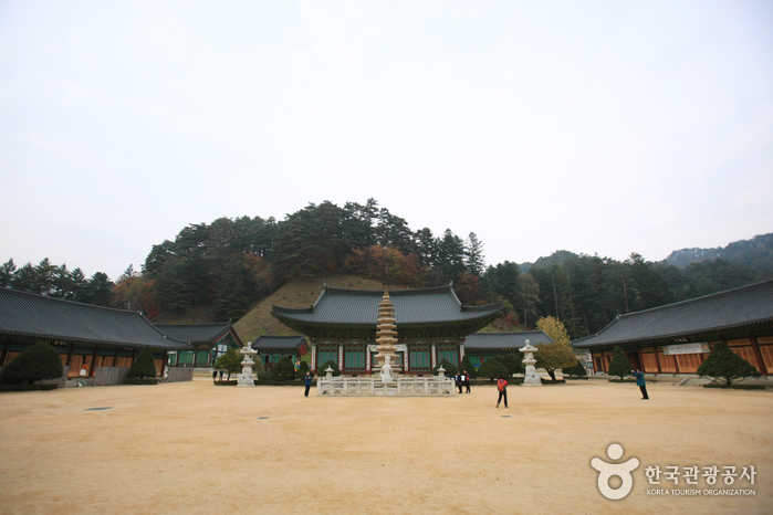 Woljeongsa Temple Stay (월정사 템플스테이)