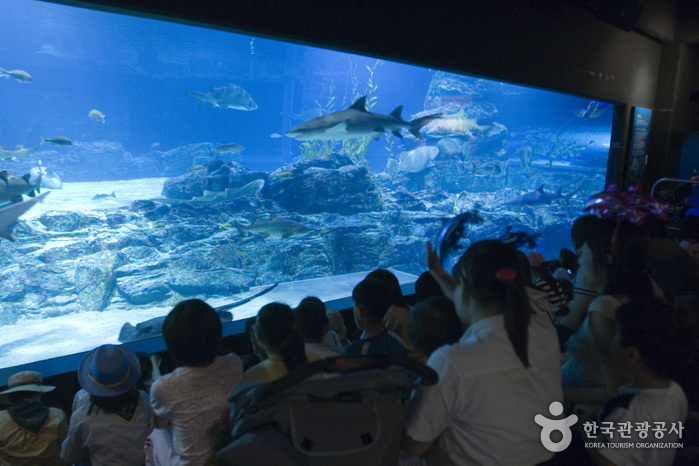 SEA LIFE Busan Aquarium (SEA LIFE 부산아쿠아리움)