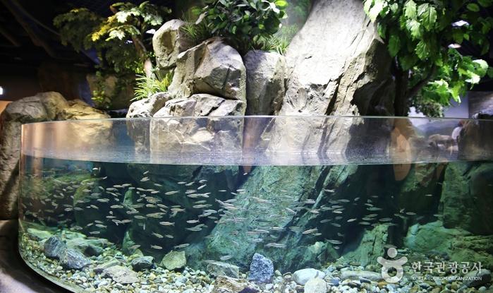 곤지암리조트화담숲민물고기생태관