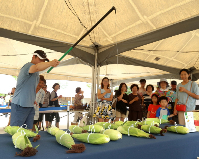 홍천 찰옥수수축제 2018  사진