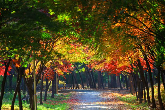 양재 시민의숲 사진87