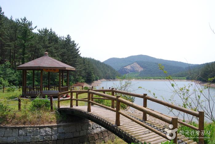 フィリ山海松自然休養林(희리산해송자