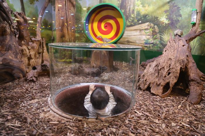 통 안에 들어가 다람쥐를 볼 수 있다.