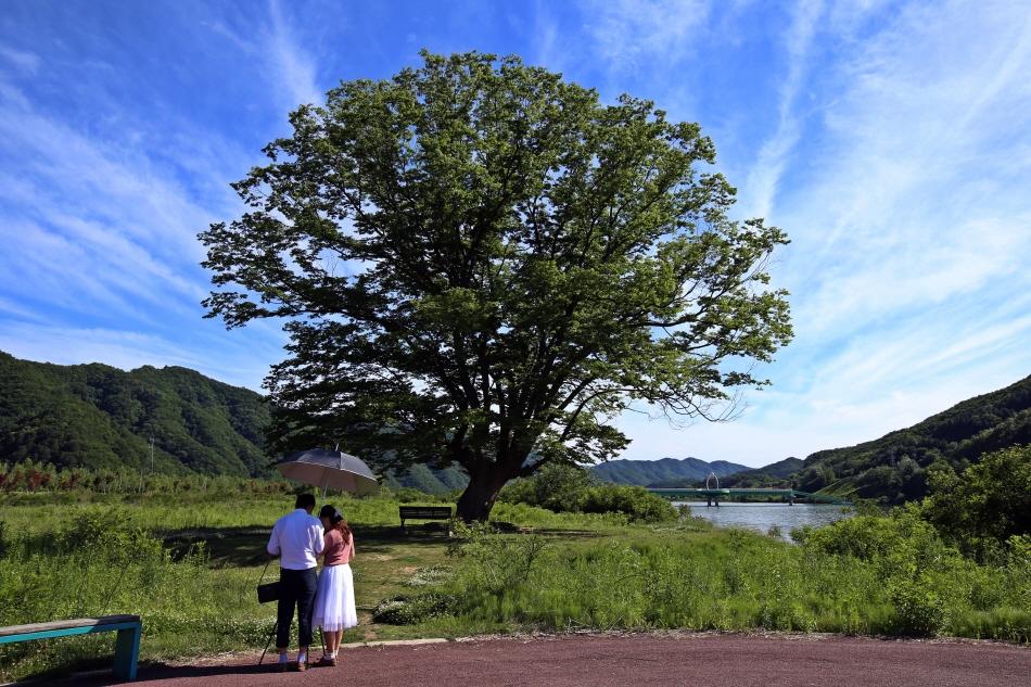 거례리 수목공원의 사랑나무는 커플들이 사진 찍는 명소다.