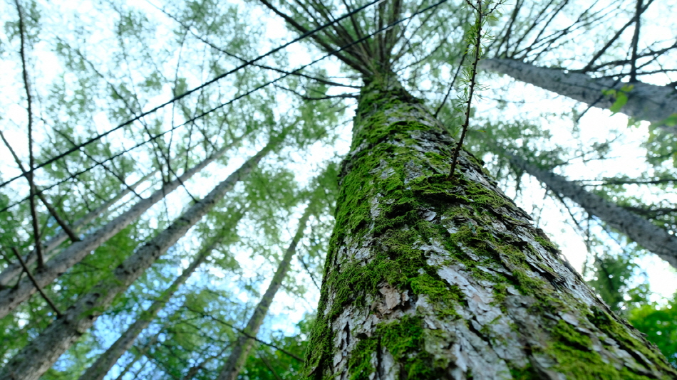 일월산 자락 한적한 숲길