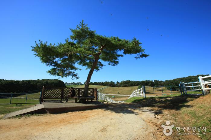 Gestüt Wondang (Let's Run Farm) (원당종마목장 (렛츠런팜 원당))