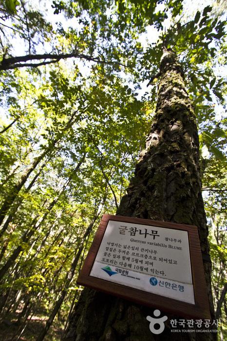 자연관찰로에서 만나는 굴참나무 안내판