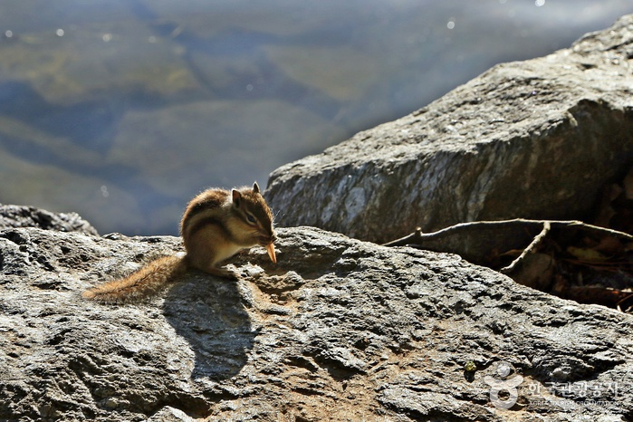 가까이 가도 놀라지 않는 다람쥐