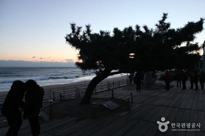 正東津日の出公園(정동진 해돋이공원)