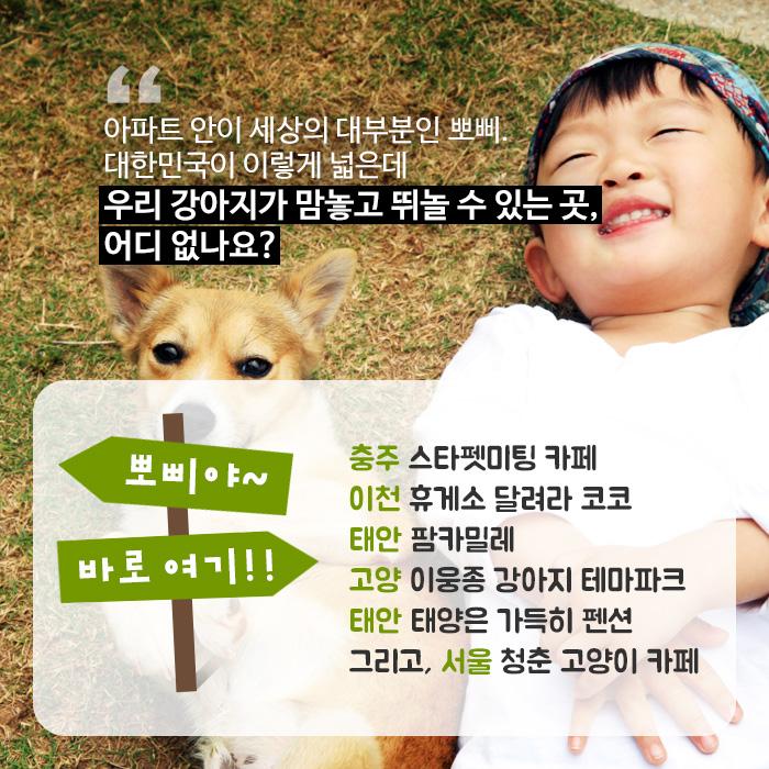 아파트 안이 세상의 대부분인 뽀삐. 대한민국이 이렇게 넓은데 우리 강아지가 맘놓고 뛰놀 수 있는 곳, 어디 없나요?