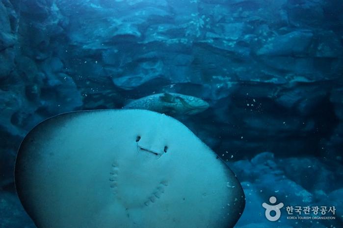 Lotte World Aquarium (롯데월드 아쿠아리움)