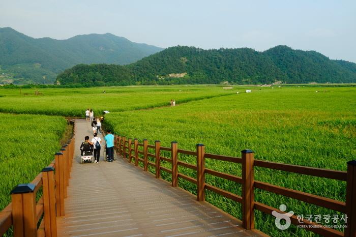 세계 정원에서 옛 읍성까지 자연주의 순천 여행 사진