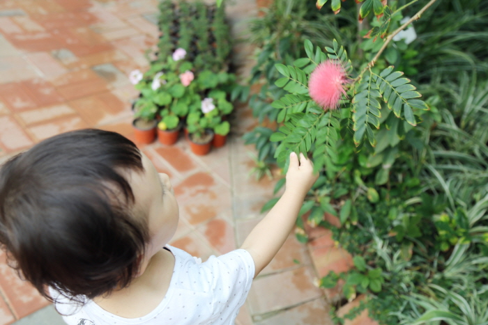 온실내부에 핀 꽃을 만지려 하는 아이