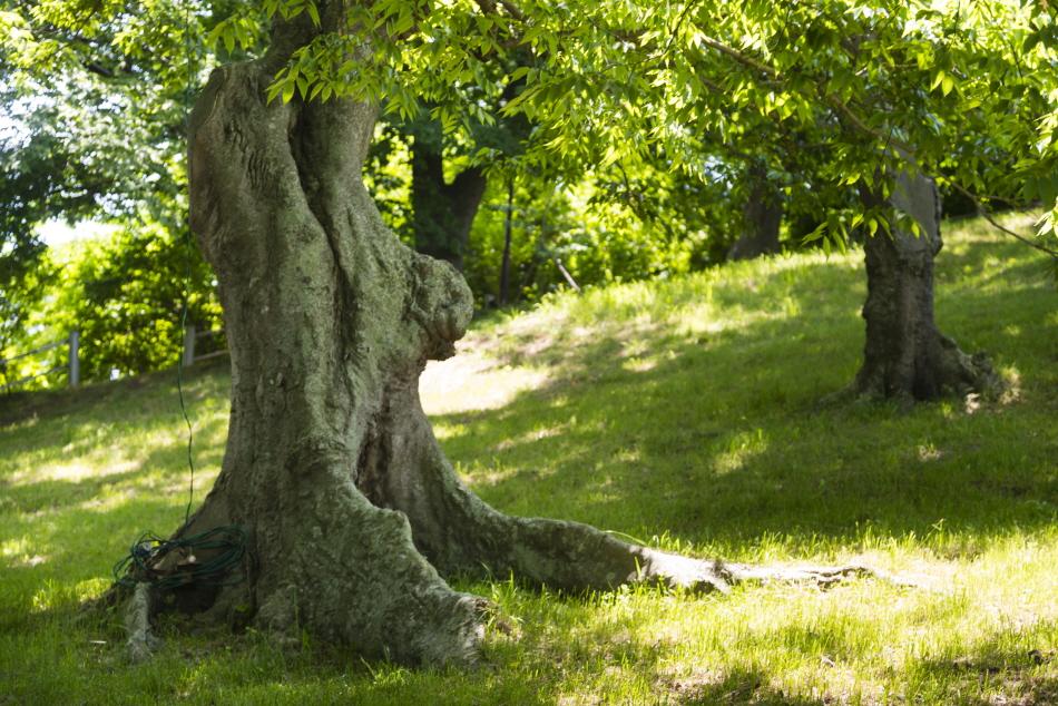 수백 년 묵은 느티나무가 늘어선 숲쟁이공원