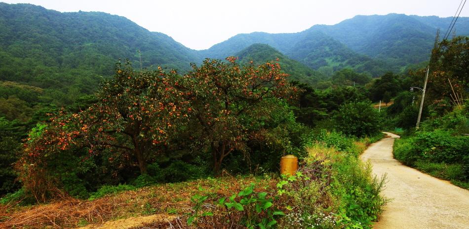 멀리 산이 보이는 풀이 우거진 좁은 산책길