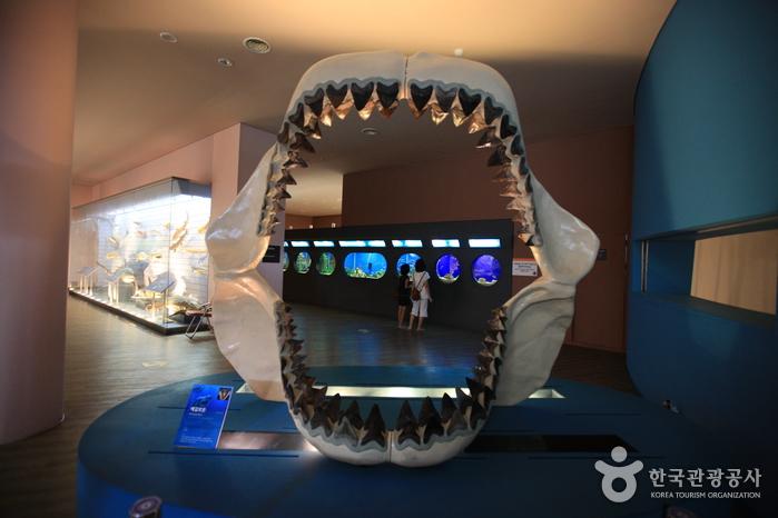 Mokpo Natural History Museum (목포자연사박물관)