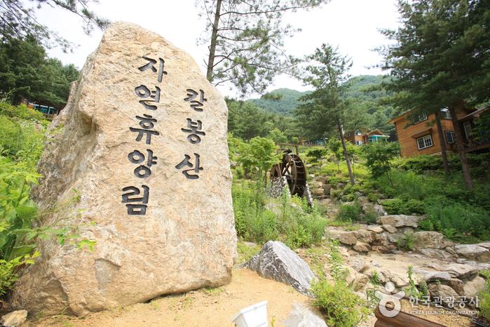 Kalbongsan Recreational Forest (칼봉산자연휴양림)