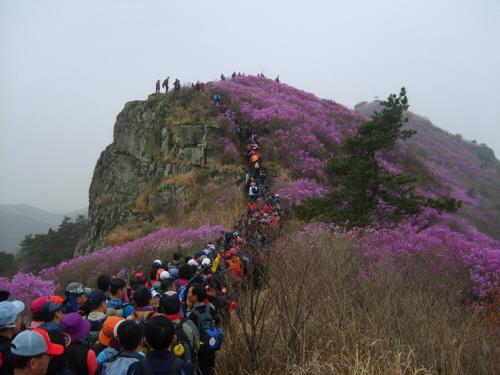 Yeongchwisan Mountain (Yeosu) (영취산 - 여수)