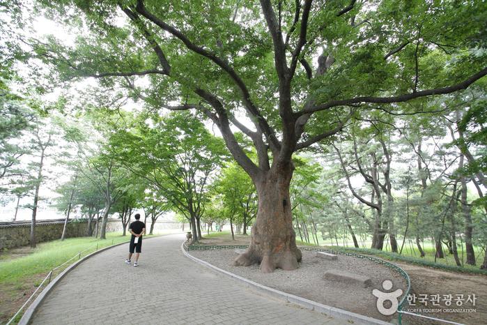 慶州大陵苑一帯(경주 대릉원 일원)