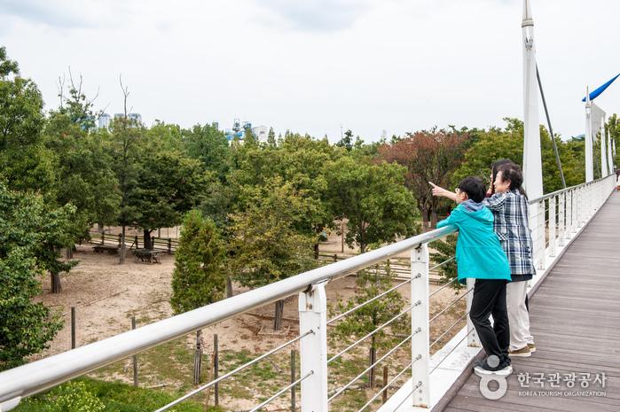 보행가교에서 생태숲 관찰