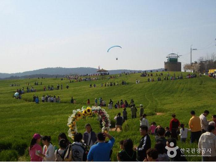 Gochang Green Barley Field Festival (고창 청보리밭축제)