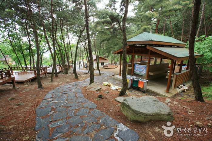 Songjeong Natural Recreation Forest (송정자연휴양림)