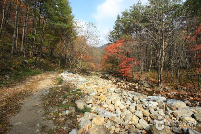 Gyebangsan Mountain - Pyeongchang (계방산 (평창))