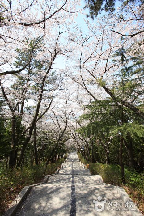 Jehwangsan Park (제황산공원)