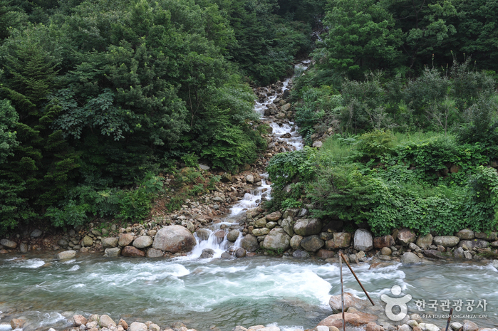 백운산 동곡계곡