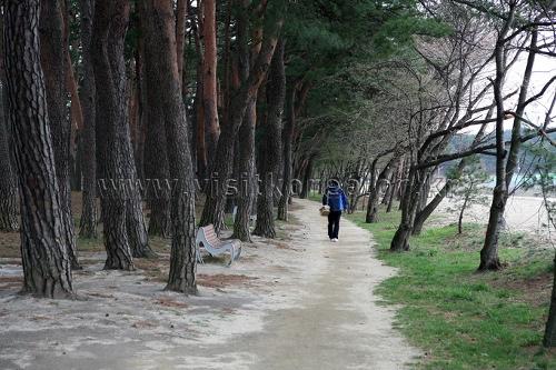 허난설헌 솔숲