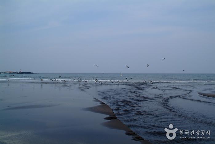 Пляж с чёрным песком Самян (삼양 검은모래해변)