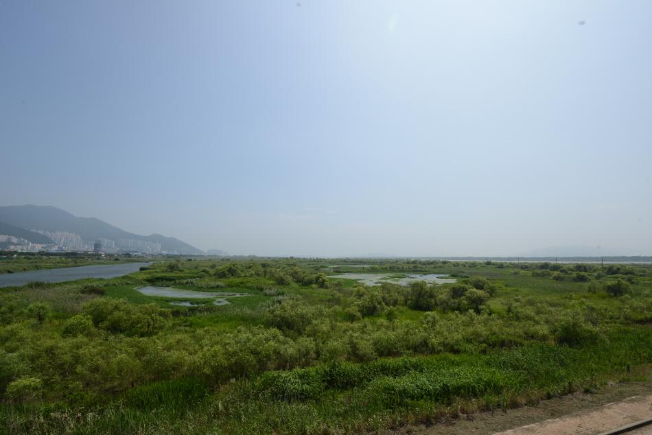낙동대교에서 본 삼락둔치의 습지. 광활한 습지의 곳곳에 물웅덩이가 보인다