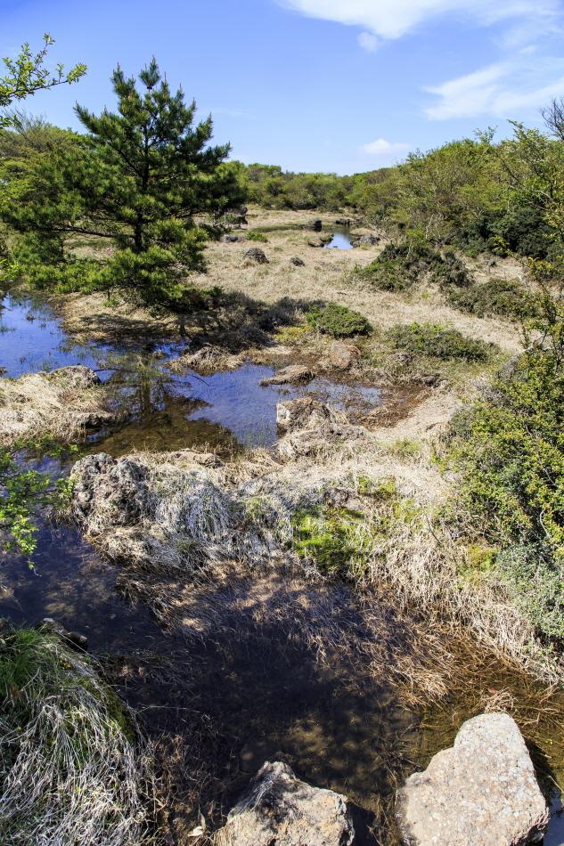 1100고지 습지는 비가 오지 않아도 크고 작은 습지가 형성된다.