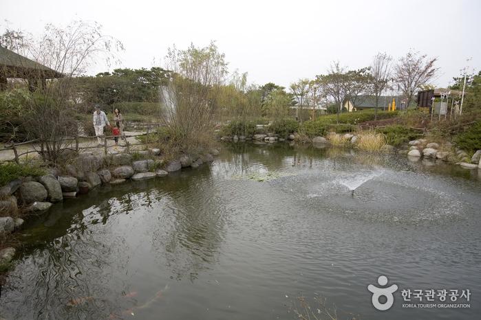 시화호_시호호갈대습지생태관 앞