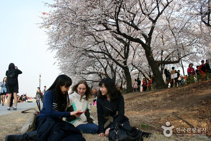 Yeongdeungpo Yeouido Spring Flower Festival (영등포 여의도 봄꽃축제)