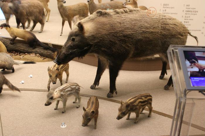 멧돼지 가족의 모형